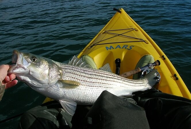 Kayak With Fishing
